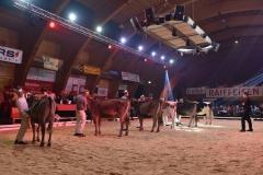 Ostschweizer Rinder Nightshow 8 - décembre 2016